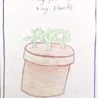 A big pot for tiny plants, Municipal Restored, 2018